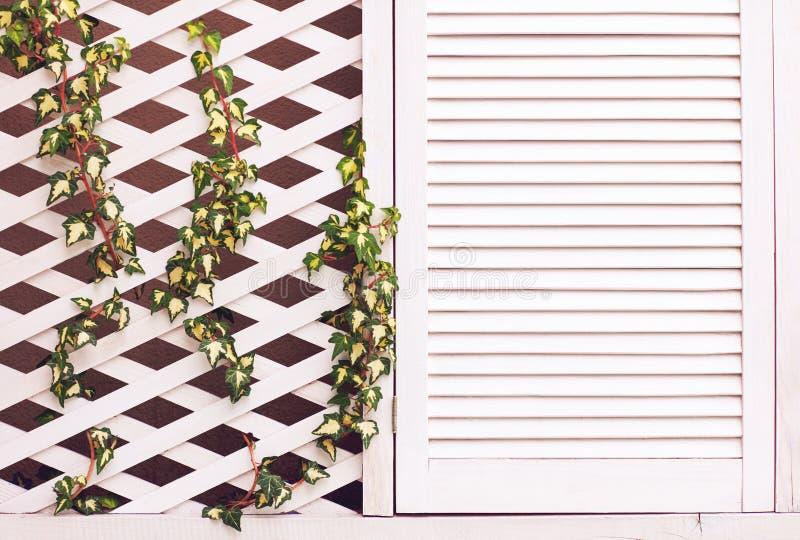 Hölzerne Gitterfassadenwand mit junger spinnender Efeuanlage stockfotografie