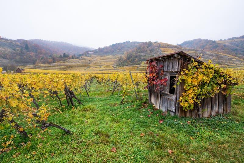 Hölzerne Hütte verziert mit herbstlichen farbigen Weinblättern im Weinberg an einem nebeligen Tag stockfotos