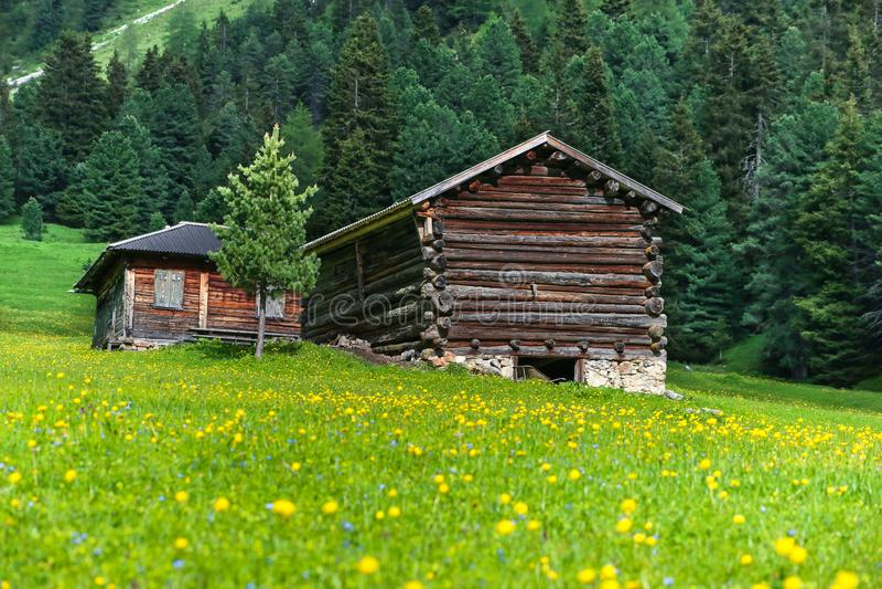 Hölzerne Kabinen und eine Wiese mit gelben Kugelblumen in den Dolomit lizenzfreie stockbilder