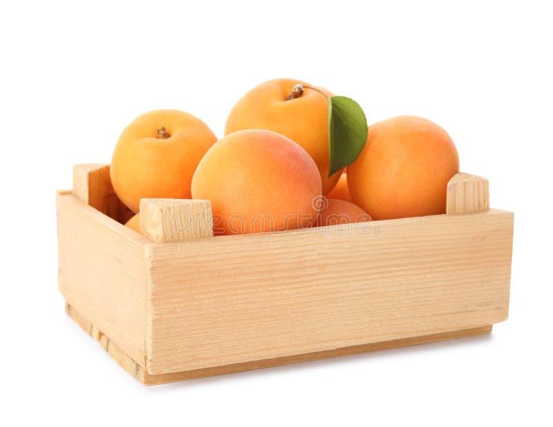 Hölzerne Kiste köstliche reife süße Aprikosen lokalisiert lizenzfreie stockfotos