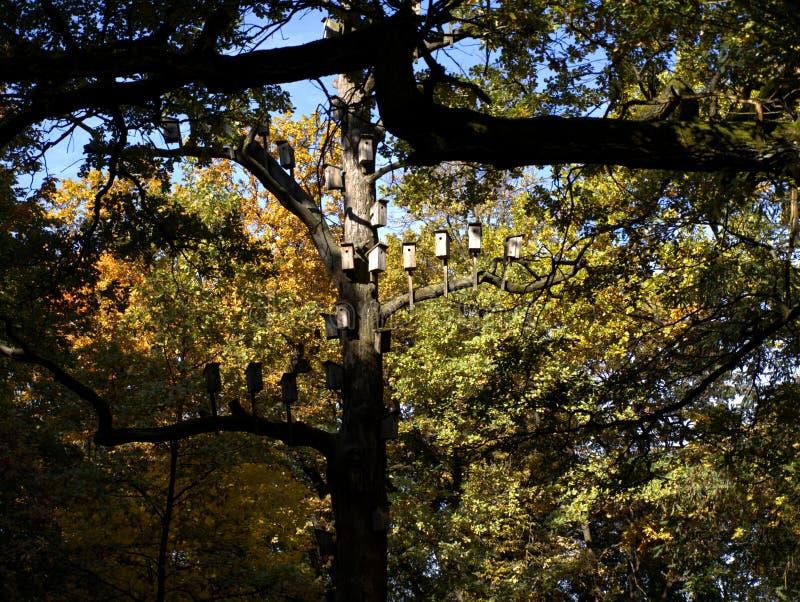 hölzerne Nistkästen im Herbst stockfotos