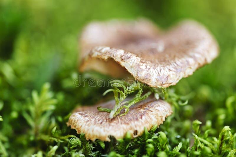 Hölzerne Pilze stockfotos