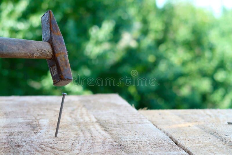 Hölzerne Planke mit einem Nagel, der in Fokus auf einem unscharfen Naturhintergrund gehämmert wird lizenzfreie stockbilder