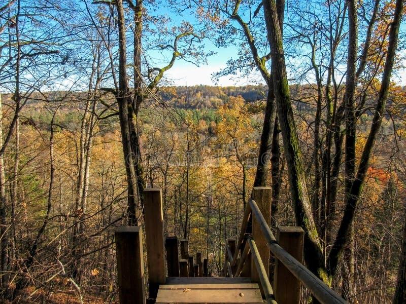 Hölzerne Schritte, die das Gauja River Valley mit buntem Wald des Herbstes hinuntergehen stockfoto