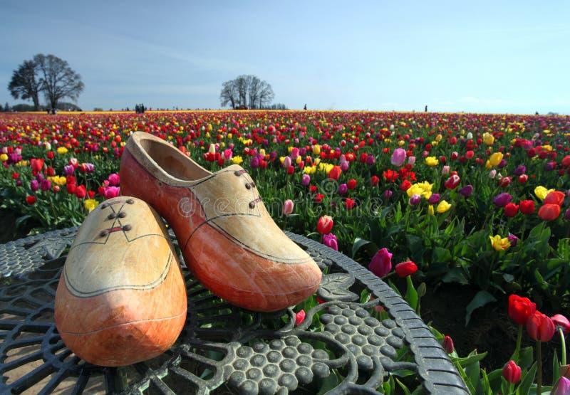 Hölzerne Schuhe und Tulpeblumengarten lizenzfreies stockbild