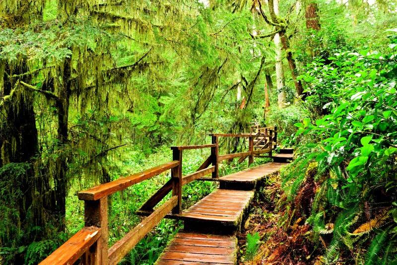 Hölzerne Spur durch den Regenwald von pazifischem Rim National Park, Vancouver Island lizenzfreie stockfotografie