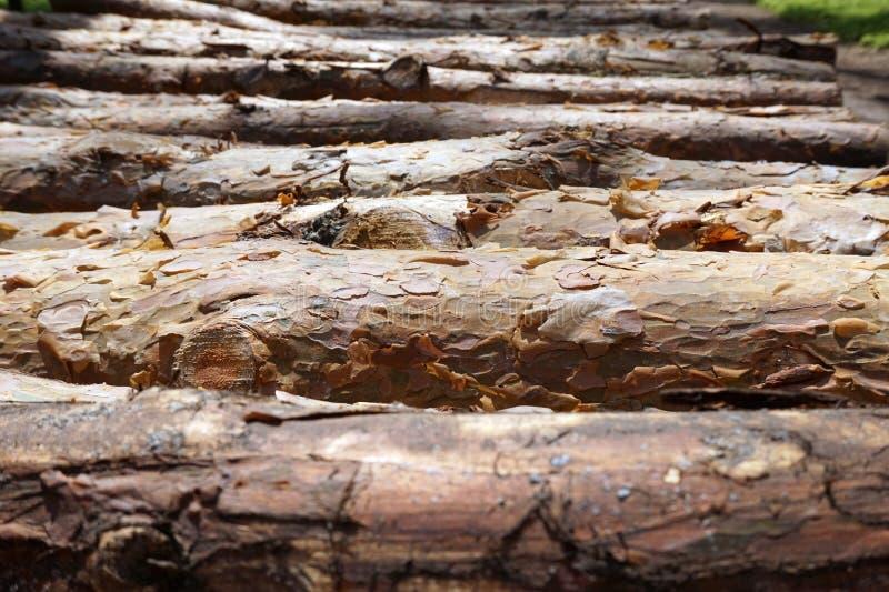 Hölzerne Stämme im Wald stockfotografie