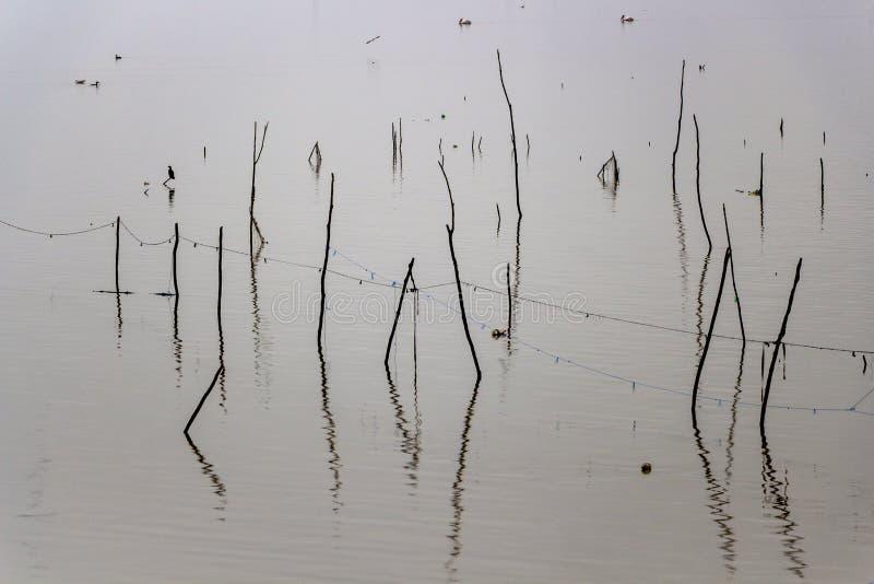 Hölzerne Stöcke und ein Kormoran im See Kerkini, Griechenland, unscharfe Kormorane und Krauskopfpelikane im Hintergrund lizenzfreie stockfotografie