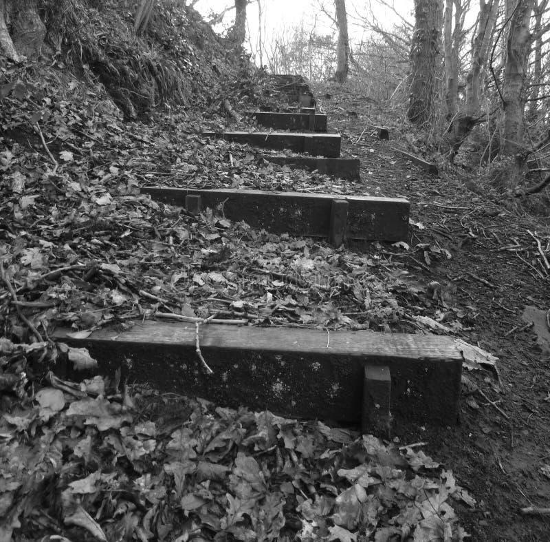 Hölzerne Treppe im Waldland lizenzfreie stockbilder