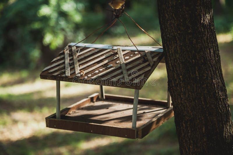 Hölzerne Vogelzufuhr auf Baum lizenzfreies stockfoto