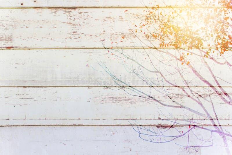 Hölzerne Wand der weißen Weinlese mit Baumast lizenzfreie stockfotos
