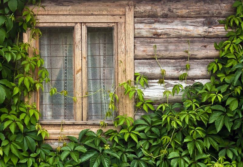 Hölzerne Wand mit Anlagen und Fenster lizenzfreies stockbild