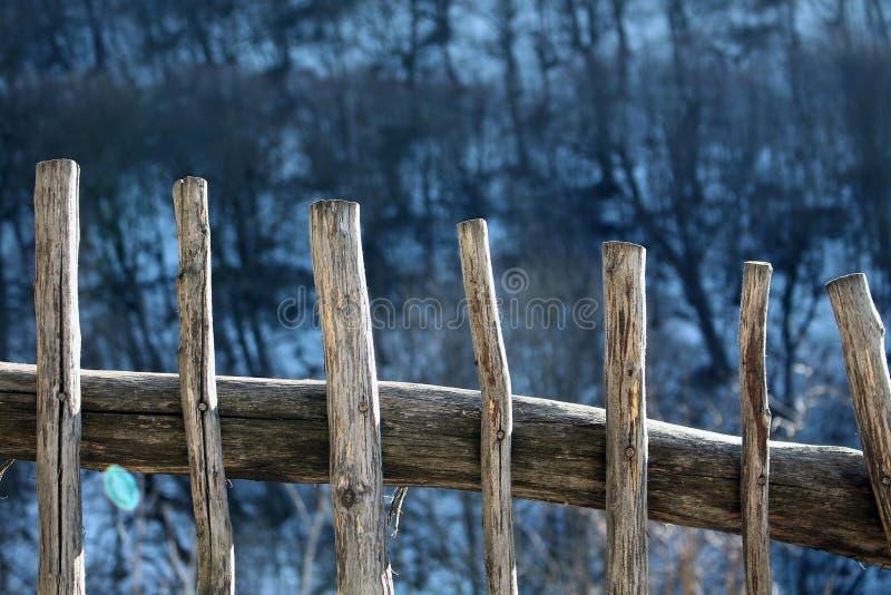 Hölzerne Wand mit Waldhintergrund stockfotografie
