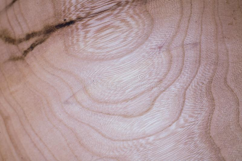 hölzerner Beschaffenheitshintergrund der Ulme im Makrolinsentrieb lizenzfreies stockbild