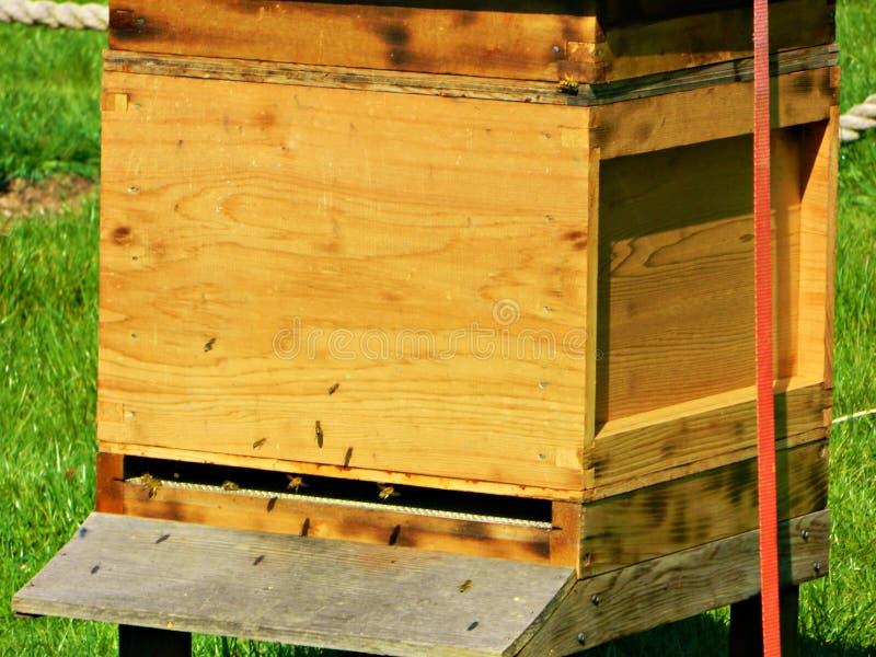 Hölzerner Bienenstock mit den Bienen herein und, die heraus fliegen lizenzfreies stockfoto