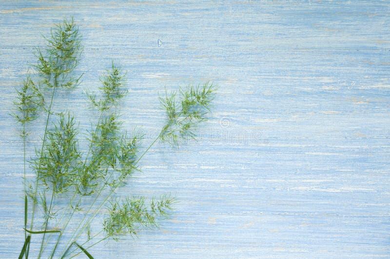 Hölzerner blauer Tabellenhintergrund des Sommers oder des Frühlinges mit den Ährchen des grünen Grases, Kopienraum lizenzfreie stockbilder