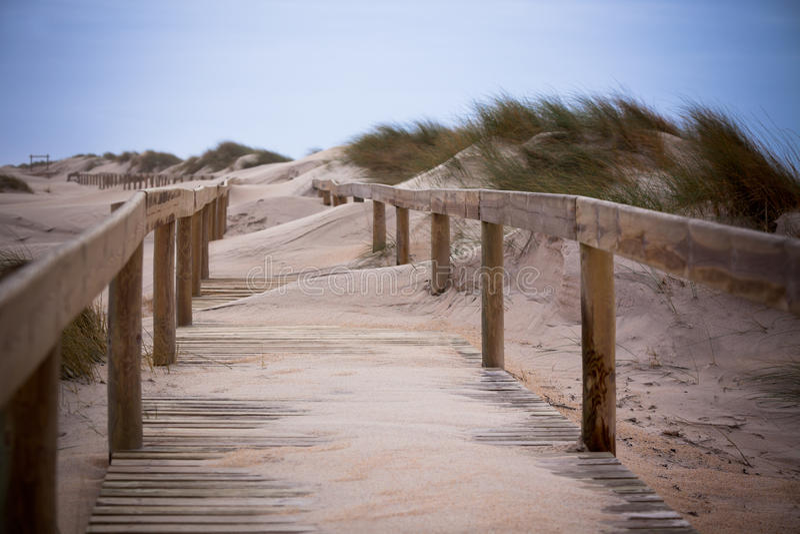 Hölzerner Fußweg durch Dünen am Ozeanstrand stockfoto