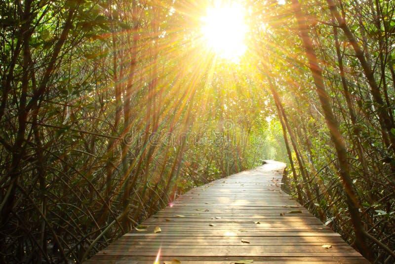Hölzerner Gehweg in den Mangrovenvorderteilen lizenzfreie stockfotografie