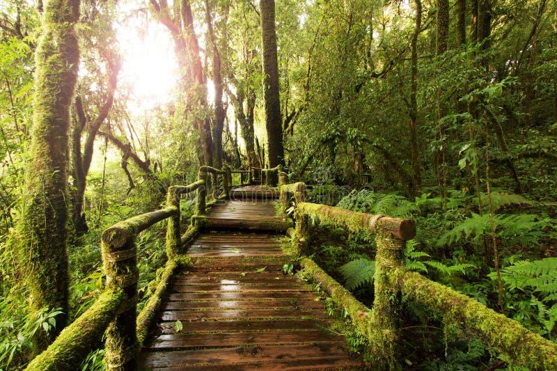 Hölzerner Gehweg durch im tiefen Regenwald stockbilder