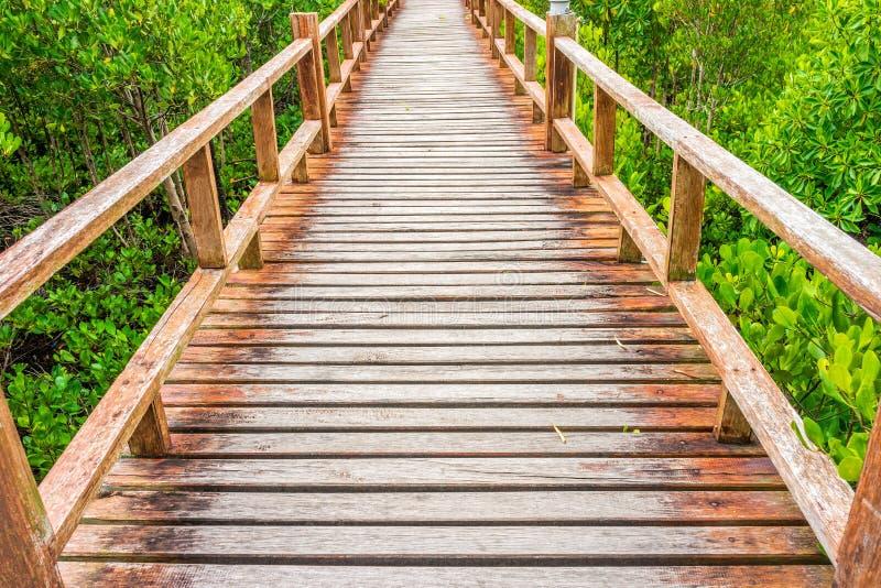 Hölzerner Gehweg im reichlichen Mangrovenwald stockbilder