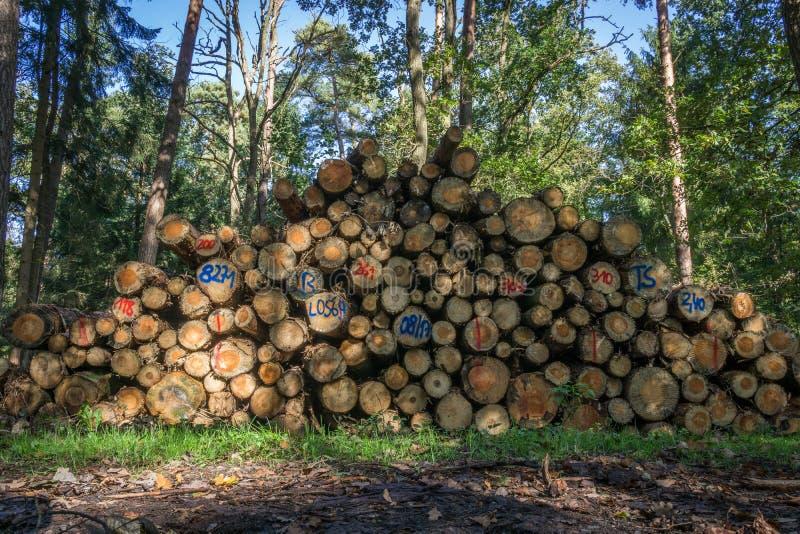 Hölzerner Haufen im Wald stockfotos