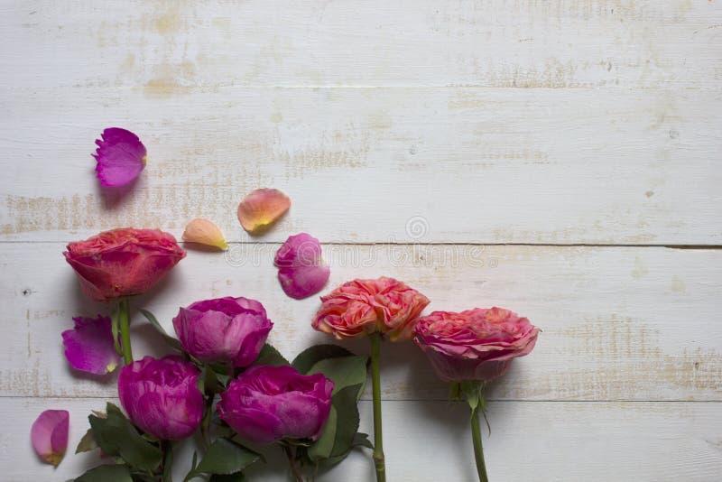 hölzerner Hintergrund der Pfingstrose-Rosen stockfotos