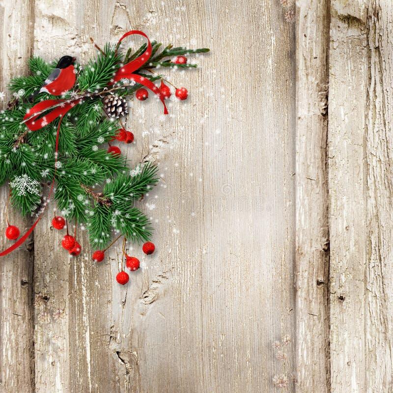 Hölzerner Hintergrund der Weihnachtsweinlese mit Tannenzweigen, Dompfaff stockbilder