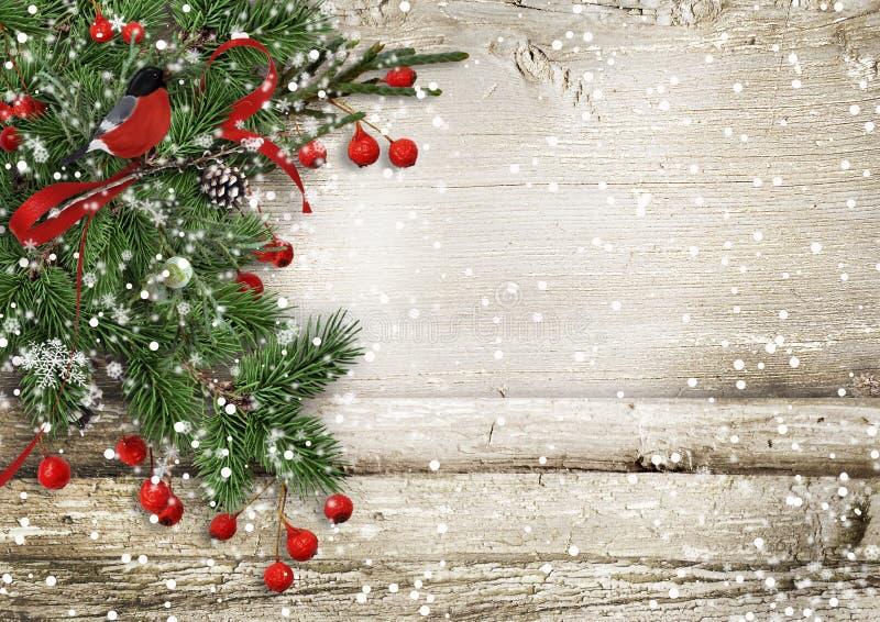 Hölzerner Hintergrund der Weihnachtsweinlese mit Tannenzweigen, Dompfaff stockfoto