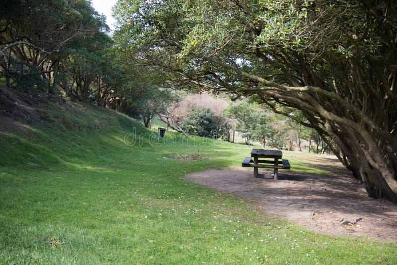 Hölzerner Picknicktisch und Bank draußen auf Grasbereich unter Bäumen, entspannendes Konzept lizenzfreie stockfotografie