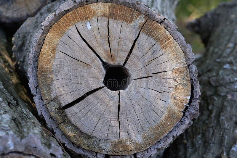 Hölzerner Stapel - Baumstamm in einem Detailschuß stockbilder