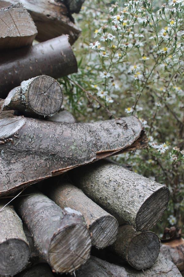 Hölzerner Stapel und Miniaturgänseblümchen stockbild