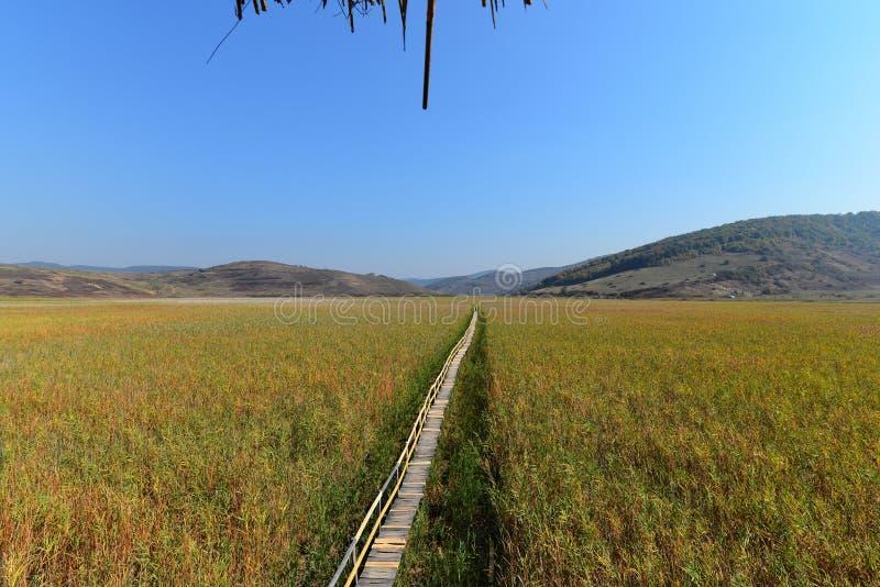 Hölzerner Steg von der sic Reedreserve zu Beginn des Herbstes stockbild