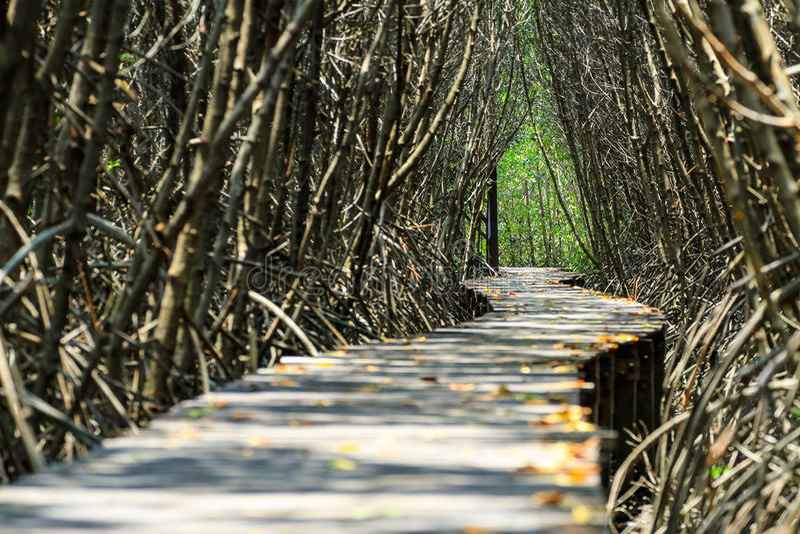 Hölzerner Weg entlang dem Mangrovenwald lizenzfreie stockfotos