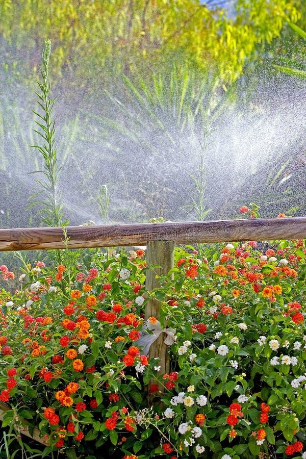 Hölzerner Zaun umgeben durch bunte Blumen lizenzfreie stockfotografie