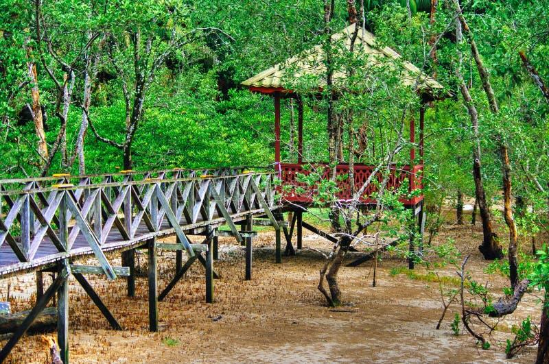 Hölzernes Bohlenbrückeobservatorium des Mangrovenwaldes im Regenwald von Borneo Malaysia lizenzfreie stockfotografie