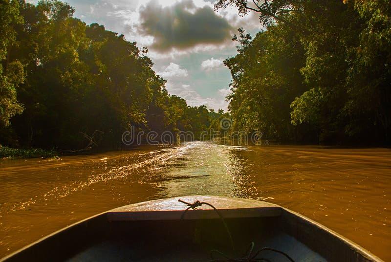 Hölzernes Boot, das auf den Fluss Kinabatangan und dichten tropischen Wald Sabah, Borneo, Malaysia schwimmt stockbilder