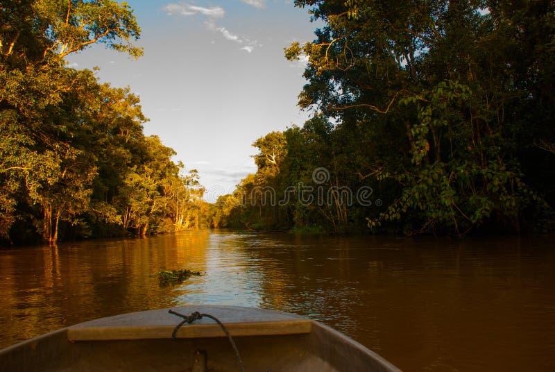 Hölzernes Boot, das auf den Fluss Kinabatangan und dichten tropischen Wald Sabah, Borneo, Malaysia schwimmt lizenzfreies stockfoto