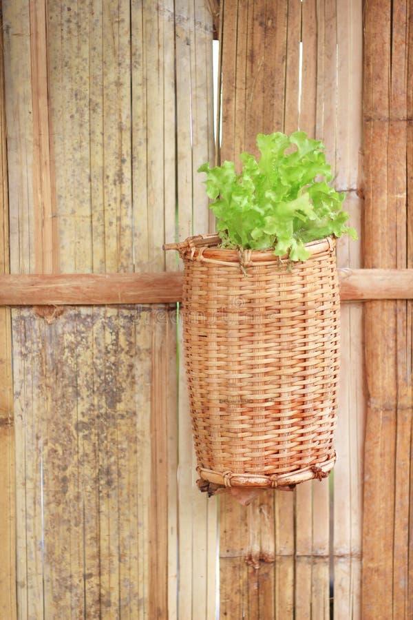 Hölzernes eingemachtes Hängen der Dekoration am Bambuswandhintergrund mit Gemüseanlagen des grünen Kopfsalates stockfoto