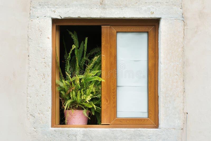 Hölzernes gestaltetes Fenster mit Topfpflanze stockbilder