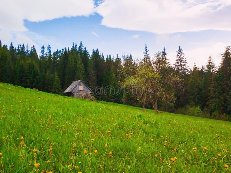 Hölzernes Häuschen in den Bergen, sonniger Frühlingstag mit grünem Gras und blühende Wiese lizenzfreies stockbild