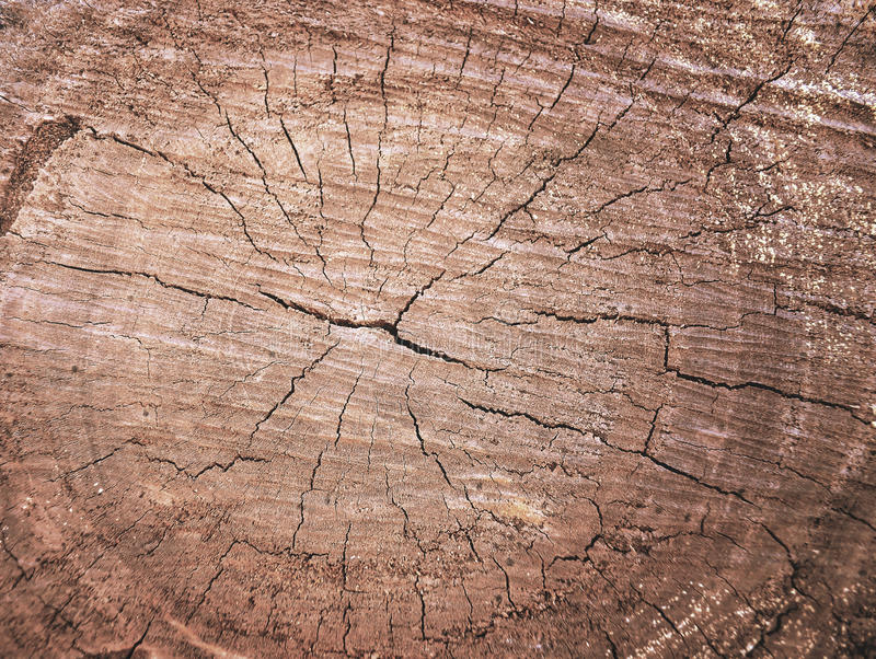 Hölzernes Korngefüge des alten Baumstumpfs mit Sprüngen in braunem Ton f stockfotos
