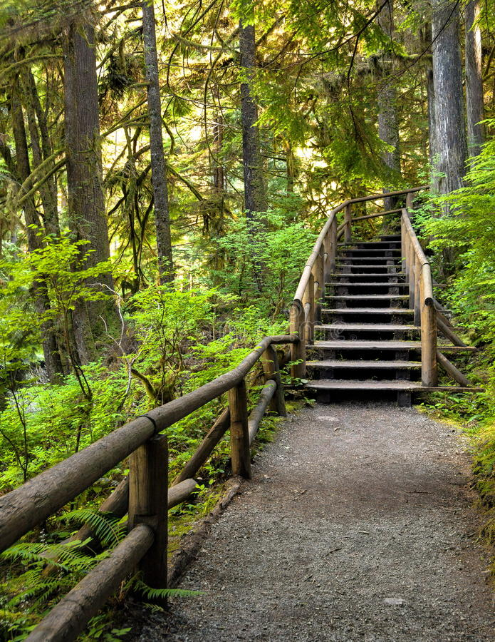 Hölzernes Treppenhaus auf einem Wanderweg stockfoto