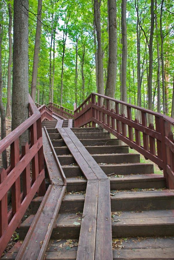 Hölzernes Treppenhaus in einem schönen grünen Wald stockbild