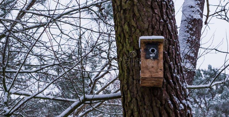 Hölzernes Vogelhaus auf einem Baumstamm während der Wintersaison, schneebedeckte Waldlandschaft im Hintergrund lizenzfreie stockbilder