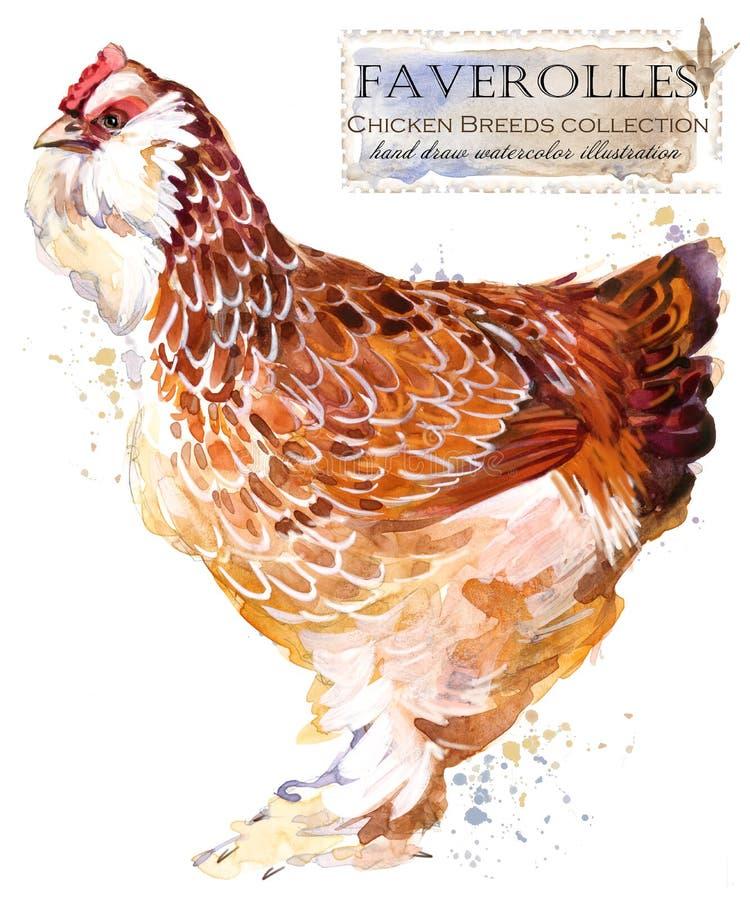 Hönslantbruk Höna föder upp serie inhemsk lantgårdfågel royaltyfri illustrationer
