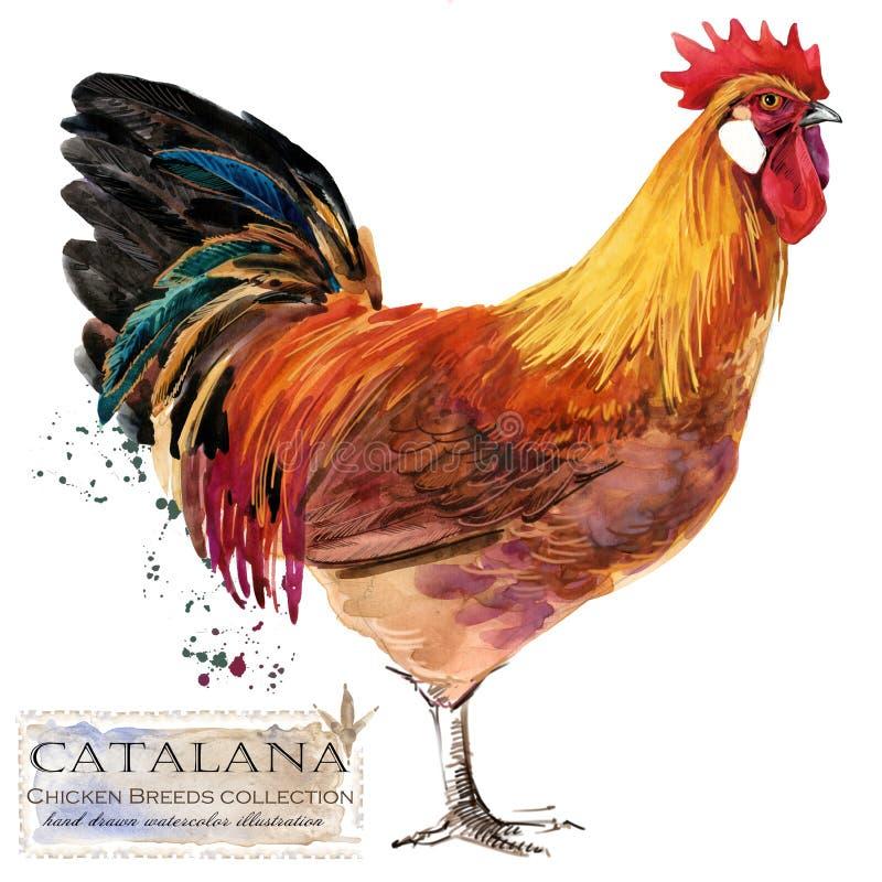 Hönslantbruk Höna föder upp serie inhemsk lantgårdfågelillustration stock illustrationer