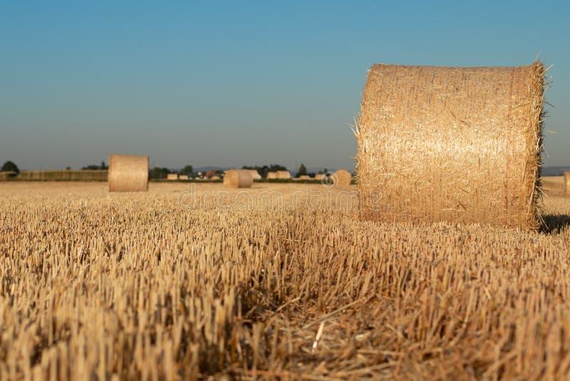 Höpackar på ett fält arkivfoton