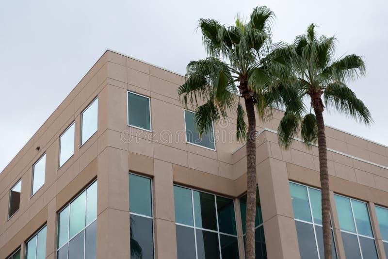 Hörn av en modern kontorsbyggnad med tonade fönster och 2 träd arkivbilder