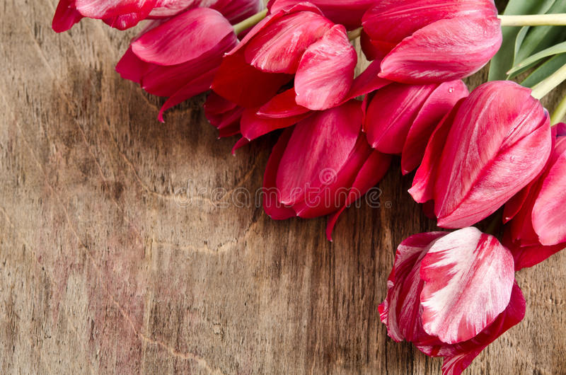 Hörn för foto från nya tulpan royaltyfria bilder