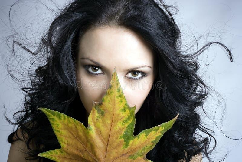 höst fotografering för bildbyråer